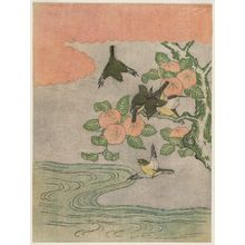 Suzuki Harunobu: Quince Fruit and Japanese White-eye (Mejiro) - Museum of Fine Arts