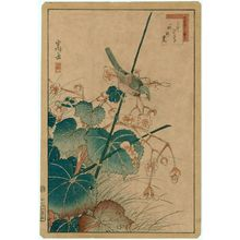Nakayama Sûgakudô: No. 27, Bluebird and Begonia (Ruribitaki, shûkaidô), from the series Forty-eight Hawks Drawn from Life (Shô utsushi yonjû-hachi taka) - ボストン美術館