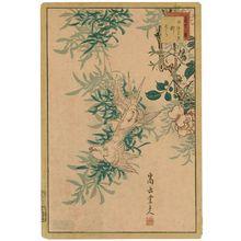 Nakayama Sûgakudô: No. 18 from the series Forty-eight Hawks Drawn from Life (Shô utsushi yonjû-hachi taka) - Museum of Fine Arts