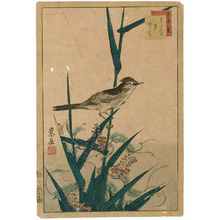 Nakayama Sûgakudô: No. 13 from the series Forty-eight Hawks Drawn from Life (Shô utsushi yonjû-hachi taka) - Museum of Fine Arts
