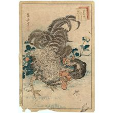 Nakayama Sûgakudô: No. 11 from the series Forty-eight Hawks Drawn from Life (Shô utsushi yonjû-hachi taka) - ボストン美術館