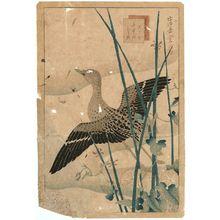 Nakayama Sûgakudô: No. 23 from the series Forty-eight Hawks Drawn from Life (Shô utsushi yonjû-hachi taka) - Museum of Fine Arts