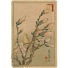 Nakayama Sûgakudô: No. 8 from the series Forty-eight Hawks Drawn from Life (Shô utsushi yonjû-hachi taka) - ボストン美術館