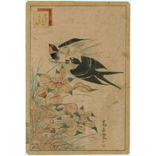 Nakayama Sûgakudô: No. 25 from the series Forty-eight Hawks Drawn from Life (Shô utsushi yonjû-hachi taka) - ボストン美術館