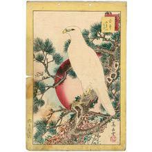 Nakayama Sûgakudô: No. 1, White Falcon and Five-needled Pine (Shirotaka, goyô no matsu), from the series Forty-eight Hawks Drawn from Life (Shô utsushi yonjû-hachi taka) - Museum of Fine Arts