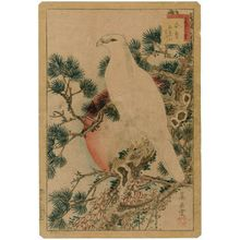Nakayama Sûgakudô: No. 1, White Falcon and Five-needled Pine (Shirotaka goyô no matsu), from the series Forty-eight Hawks Drawn from Life (Shô utsushi yonjû-hachi taka) - Museum of Fine Arts