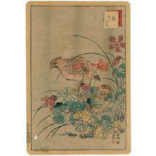 Nakayama Sûgakudô: No. 9 from the series Forty-eight Hawks Drawn from Life (Shô utsushi yonjû-hachi taka) - ボストン美術館