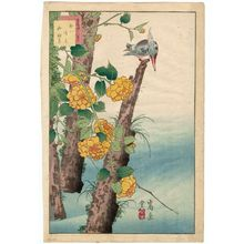 Nakayama Sûgakudô: No. 4, Kingfisher and Kerria Roses (Kawasemi yamabuki), from the series Forty-eight Hawks Drawn from Life (Shô utsushi yonjû-hachi taka) - ボストン美術館