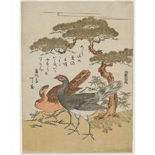 Isoda Koryusai: Two Ptarmigans under a Pine Tree - Museum of Fine Arts