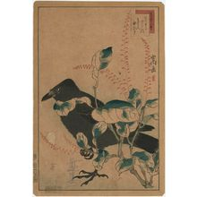Nakayama Sûgakudô: No. 34 from the series Forty-eight Hawks Drawn from Life (Shô utsushi yonjû-hachi taka) - ボストン美術館