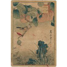 Nakayama Sûgakudô: No. 20 from the series Forty-eight Hawks Drawn from Life (Shô utsushi yonjû-hachi taka) - Museum of Fine Arts