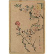 Nakayama Sûgakudô: No. 5, Finches and Peach Blossoms (Bundori momo no hana), from the series Forty-eight Hawks Drawn from Life (Shô utsushi yonjû-hachi taka) - Museum of Fine Arts