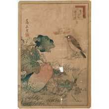 Nakayama Sûgakudô: No. 26 from the series Forty-eight Hawks Drawn from Life (Shô utsushi yonjû-hachi taka) - ボストン美術館
