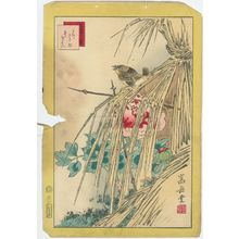 Nakayama Sûgakudô: No. 42 from the series Forty-eight Hawks Drawn from Life (Shô utsushi yonjû-hachi taka) - ボストン美術館