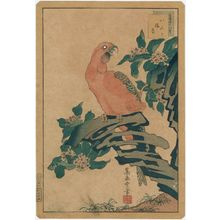 Nakayama Sûgakudô: No. 10 from the series Forty-eight Hawks Drawn from Life (Shô utsushi yonjû-hachi taka) - Museum of Fine Arts