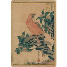 Nakayama Sûgakudô: No. 10 from the series Forty-eight Hawks Drawn from Life (Shô utsushi yonjû-hachi taka) - Museum of Fine Arts