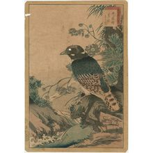 Nakayama Sûgakudô: No. 31 from the series Forty-eight Hawks Drawn from Life (Shô utsushi yonjû-hachi taka) - ボストン美術館