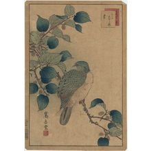 Nakayama Sûgakudô: No. 22 from the series Forty-eight Hawks Drawn from Life (Shô utsushi yonjû-hachi taka) - ボストン美術館