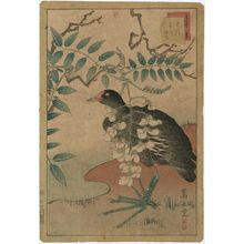 Nakayama Sûgakudô: No. 14 from the series Forty-eight Hawks Drawn from Life (Shô utsushi yonjû-hachi taka) - ボストン美術館