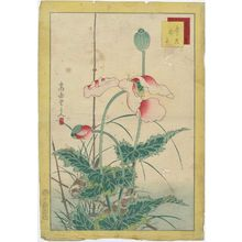 Nakayama Sûgakudô: No. 16 from the series Forty-eight Hawks Drawn from Life (Shô utsushi yonjû-hachi taka) - ボストン美術館