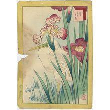 Nakayama Sûgakudô: No. 17, Heron and Iris (Sagi hanashôbu), from the series Forty-eight Hawks Drawn from Life (Shô utsushi yonjû-hachi taka) - ボストン美術館
