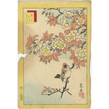 Nakayama Sûgakudô: No. 12 from the series Forty-eight Hawks Drawn from Life (Shô utsushi yonjû-hachi taka) - ボストン美術館