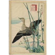 Nakayama Sûgakudô: No. 23 from the series Forty-eight Hawks Drawn from Life (Shô utsushi yonjû-hachi taka) - ボストン美術館