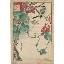 Nakayama Sûgakudô: No. 29 from the series Forty-eight Hawks Drawn from Life (Shô utsushi yonjû-hachi taka) - Museum of Fine Arts