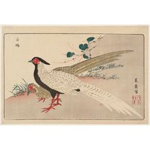 北尾政美: Silver Pheasants (Hakkan), reprinted from the album Kaihaku raikin zui (A Compendium of Pictures of Birds Imported from Overseas) - ボストン美術館