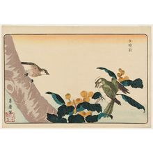 Kitao Masayoshi: Gray Starling (Hakutô-ô) in Loquat Tree, reprinted from the album Kaihaku raikin zui (A Compendium of Pictures of Birds Imported from Overseas) - Museum of Fine Arts