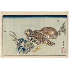 Kitao Masayoshi: Partridges (Shako) and Rapids, reprinted from the album Kaihaku raikin zui (A Compendium of Pictures of Birds Imported from Overseas) - Museum of Fine Arts