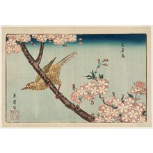 北尾政美: Bunting (Gabichô) and Cherry Blossoms, reprinted from the album Kaihaku raikin zui (A Compendium of Pictures of Birds Imported from Overseas) - ボストン美術館