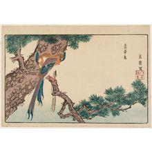 北尾政美: Magpies (Jutaichô) in Pine Tree, reprinted from the album Kaihaku raikin zui (A Compendium of Pictures of Birds Imported from Overseas) - ボストン美術館