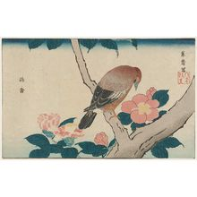 北尾政美: Sparrow Hawk (Yôkin) and Camellia, reprinted from the album Kaihaku raikin zui (A Compendium of Pictures of Birds Imported from Overseas) - ボストン美術館