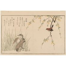 Kitagawa Utamaro: Wren (Misosazai) and Snipe (Shigi), from the album Momo chidori kyôka awase (Myriad Birds: A Kyôka Competition) - Museum of Fine Arts