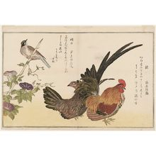 Kitagawa Utamaro: Chickens (Niwatori) and Bunting (Hôjiro), from the album Momo chidori kyôka awase (Myriad Birds: A Kyôka Competition) - Museum of Fine Arts