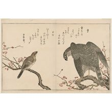 Kitagawa Utamaro: Falcon (Taka) and Shrike (Mozu), from the album Momo chidori kyôka awase (Myriad Birds: A Kyôka Competition) - Museum of Fine Arts
