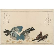 喜多川歌麿: Sparrows (Murasuzume) and Pigeons (Hato), from the album Momo chidori kyôka awase (Myriad Birds: A Kyôka Competition) - ボストン美術館