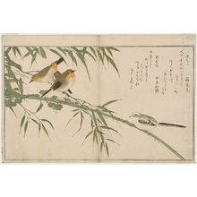 Kitagawa Utamaro: Long-tailed Tit (Enaga) and Japanese White-Eyes (Mejiro), from the album Momo chidori kyôka awase (Myriad Birds: A Kyôka Competition) - Museum of Fine Arts