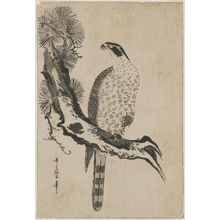 喜多川歌麿: Falcon and Pine Tree - ボストン美術館