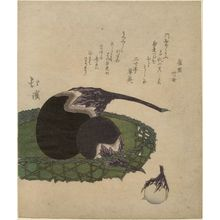 魚屋北渓: Basket of eggplants from an untitled series of Three Lucky Dreams - ボストン美術館
