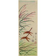 Utagawa Yoshimori: Dragonflies and Pampas Grass - ボストン美術館