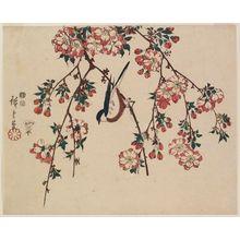 Utagawa Hiroshige: Bird on Double Cherry Branch - Museum of Fine Arts