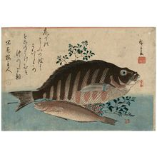 歌川広重: Striped Sea Bream, Rock-trout, and Nandina, from an untitled series known as Large Fish - ボストン美術館