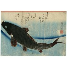 Utagawa Hiroshige: Carp, from an untitled series known as Large Fish - Museum of Fine Arts