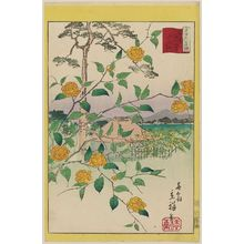 Utagawa Hiroshige II: Kerria Roses at Yamabuki Village in Tokyo (Tôkyô Yamabuki no sato yamabuki), from the series Thirty-six Selected Flowers (Sanjûrokkasen) - Museum of Fine Arts