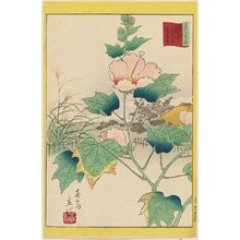 Utagawa Hiroshige II: Hibiscus in the Flower Garden [at Mukôjima] on the Sumida River in the Eastern Capital (Tôto Sumidagawa hana yashiki fuyô-bana), from the series Thirty-six Selected Flowers (Sanjûrokkasen) - Museum of Fine Arts