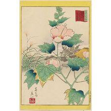 二歌川広重: Hibiscus in the Flower Garden [at Mukôjima] on the Sumida River in the Eastern Capital (Tôto Sumidagawa hana yashiki fuyô-bana), from the series Thirty-six Selected Flowers (Sanjûrokkasen) - ボストン美術館