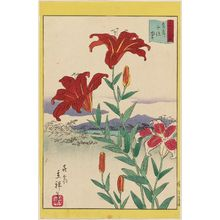 二歌川広重: Lilies at Senju in the Eastern Capital (Tôto Senju yuri), from the series Thirty-six Selected Flowers (Sanjûrokkasen) - ボストン美術館