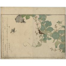 Kitagawa Utamaro: Hairy Caterpillar (Kemushi) and Paper Wasp (Hachi), from the album Ehon mushi erami (Picture Book: Selected Insects) - Museum of Fine Arts